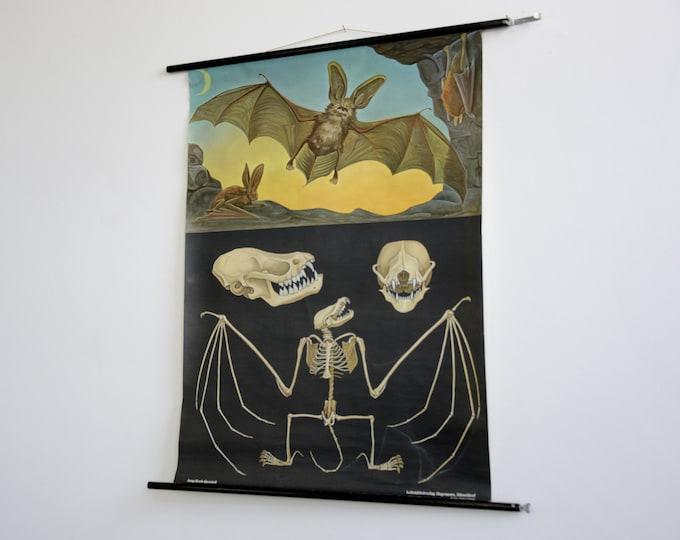 Wall Chart Of The Bat By Jung Koch Quentell