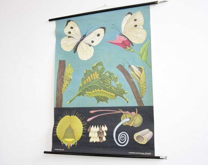 Wall Chart Of The Butterfly By Jung Koch Quentell