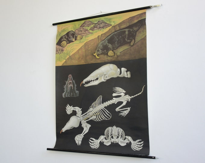 Wall Chart Of The Mole By Jung Koch Quentell