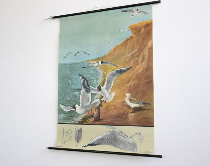 Wall Chart Of The Seagull By Jung Koch Quentell
