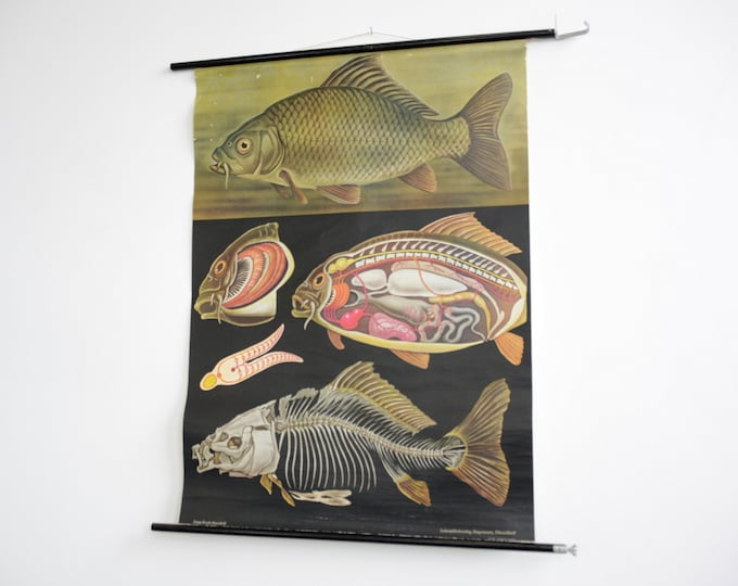 Wall Chart Of The Fish By Jung Koch Quentell