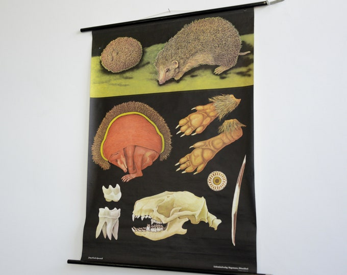 Wall Chart Of The Hedgehog By Jung Koch Quentell