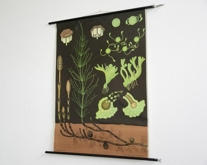 Botanical Wall Chart By Jung Koch Quentell