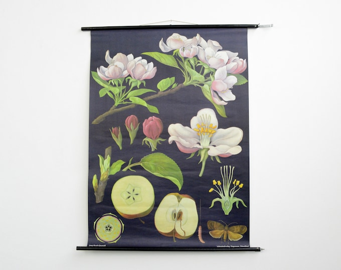 Wall Chart Of The Apple Tree By Jung Koch Quentell