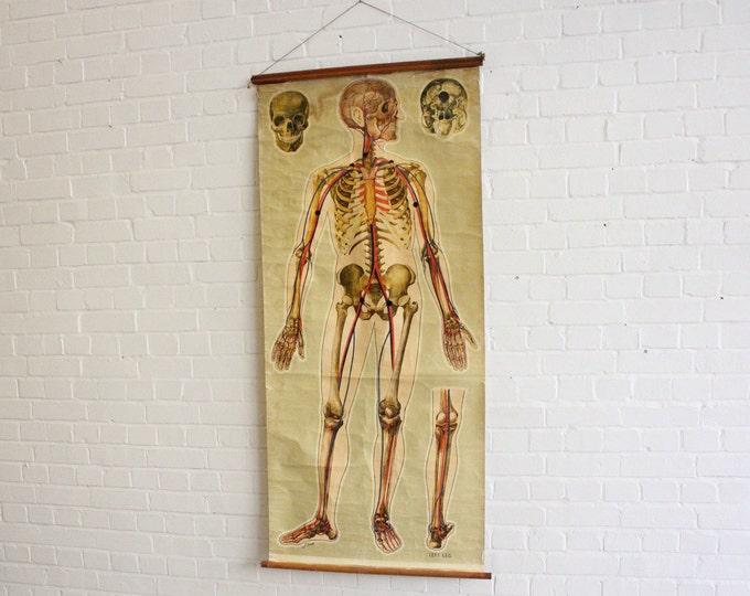 Large St Johns Ambulance Anatomical Chart Of The Skeleton