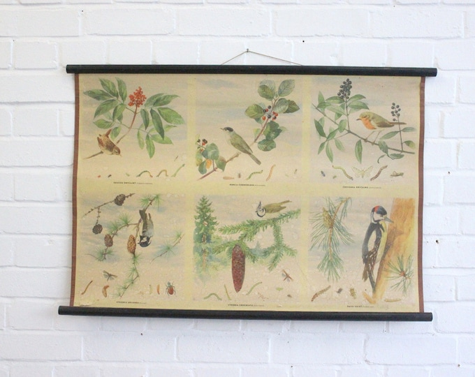 "Early 20th Century School Chart ""Birds"""