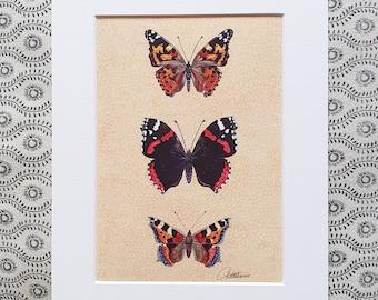 Butterfly Accent Butterfly Decor Butterfly Print Butterflies Wallart Butterfly Couples Gift Butterfly Nature Lovers Gift Wildlife Wallart