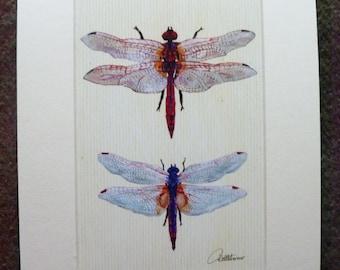Libelle Bild Libellen Wand Kunst Libelle Malerei Libelle Dekor Libelle Kunstwerk Libelle Einrichtung Libelle Geschenk, sehr hübsch