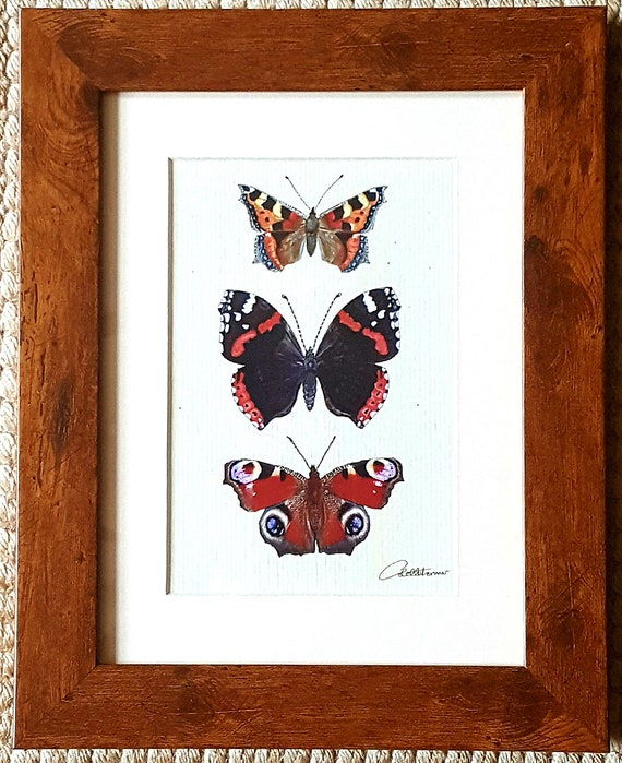 Butterfly Wall Art Butterfly Painting Butterfly Decor Butterfly Print Framed Butterflies Butterfly Picture Gift Garden Butterflies Trio