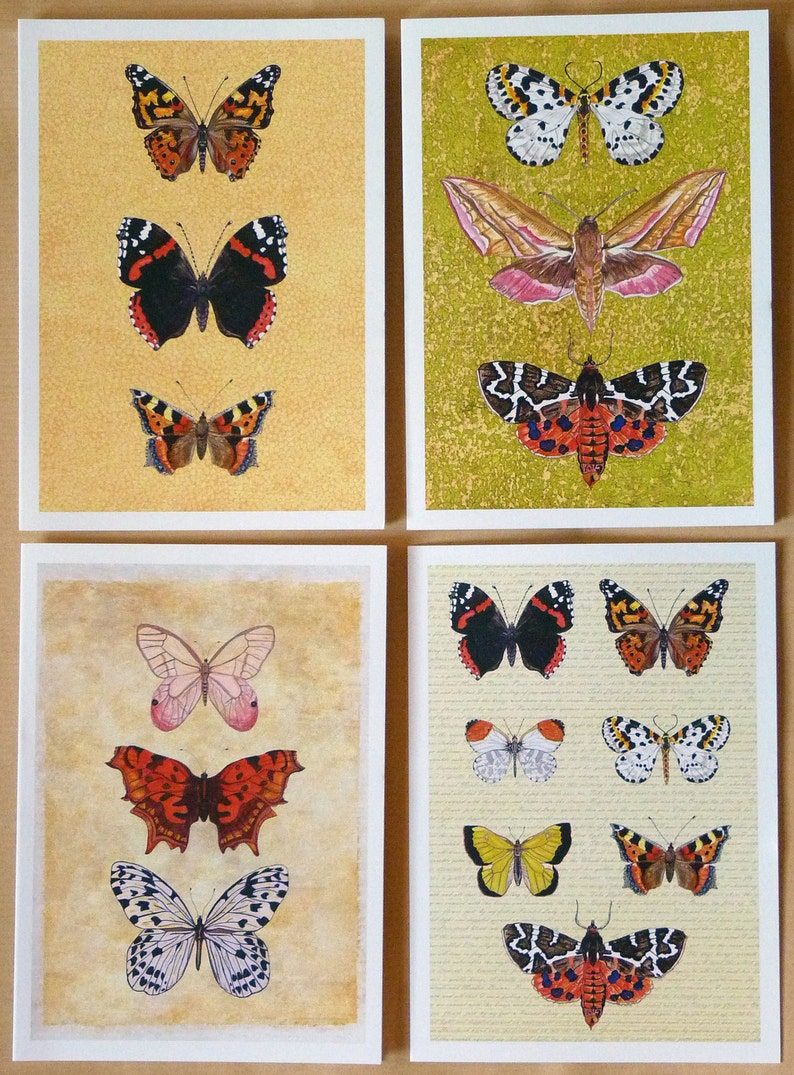 Butterfly Cards Moth Cards Pack of Insect Cards  Quality image 0