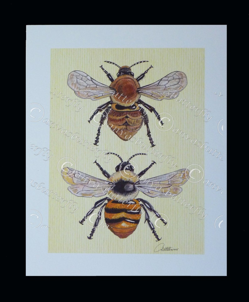 BEE Print Bee Picture Bee Art Carder Bee Duo  Bees are a image 0