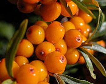 Turmeric + Helichrysum Reparative Whipped Oil