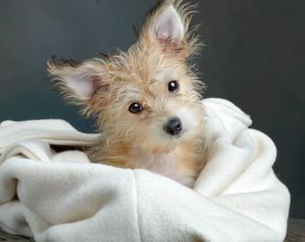 Small Natural Sleeping Bag/ Small DOGS.  Cozy, Washable, and Reversible. Organic Cotton Snuggle Sack. Plastic Free/ Dye Free Dog Sleep Sack.