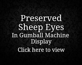 20 Wet Specimen Sheep Eyes in Gumball Machine