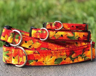 The Fall Maples Dog and Cat Collar