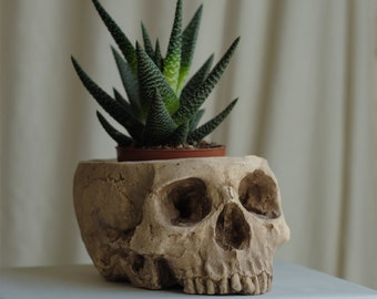HUMAN SKULL PLANTER full size human skull planter, waterproof plaster polymer painted for an aged appearance, suitable indoors or out