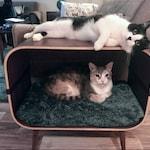 Mid-century modern cat furniture