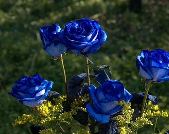 Rose Seeds Etsy