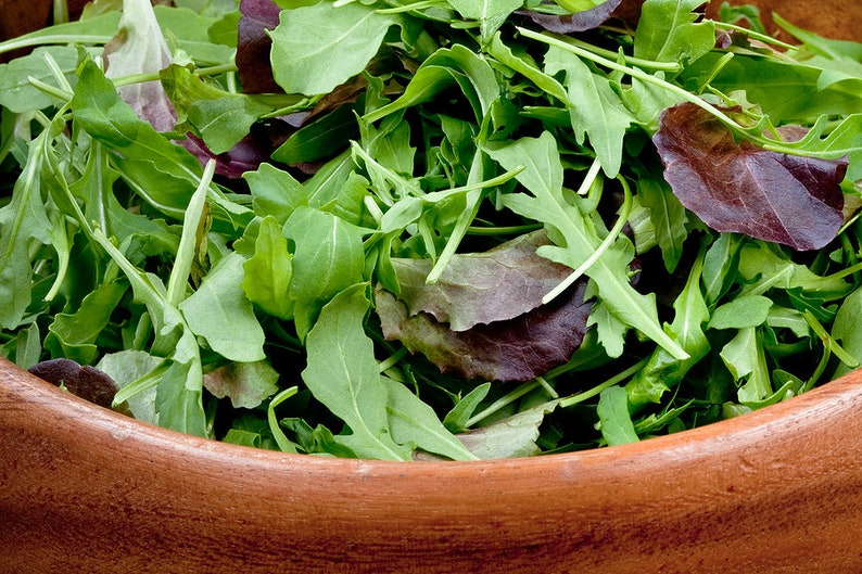 SPICY ITALIAN MESCLUN Mix Seeds - Mouth Watering - Easy to Grow - 100 Seeds