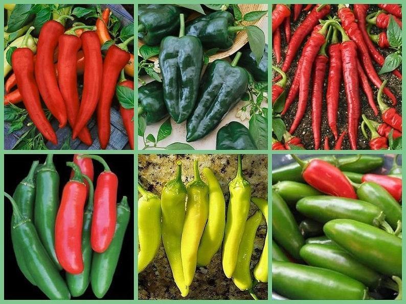Vegetable Garden Seed Collection - 6 HOT!!!! Pepper Varieties - 120 Seeds