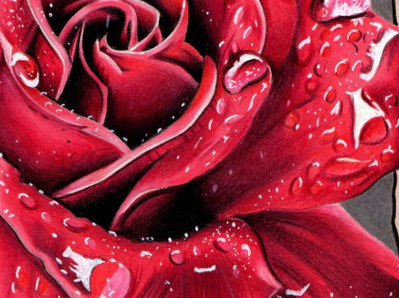 Red Rose Limited Edition Print