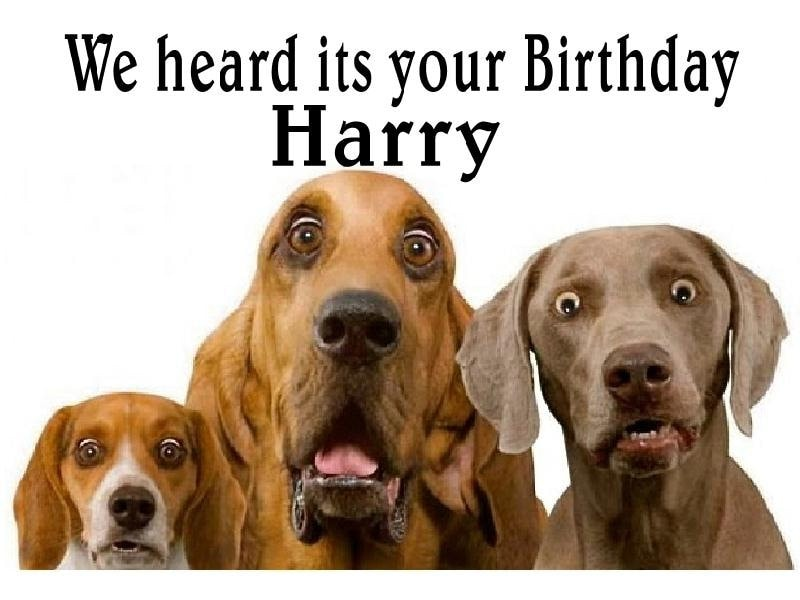 Funny Cute Surprised Dogs Birthday Card Personalised