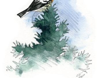 Blackburnian Warbler- bird art, wildlife art - nature print of original artwork - A5