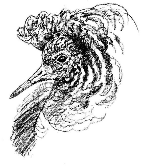 Ruff Rysunek Ołówkiem Ptak Sztuki Sztuki Przyrody Etsy