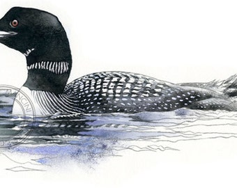Common Loon watercolour - bird wildlife art - nature print of original artwork