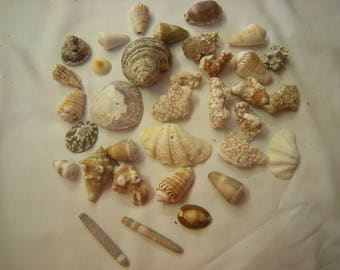2 lbs of shells-coral-art-crafts-aquarium-beach wedding-supplie-display-child show and tell-collection-pacific shells-