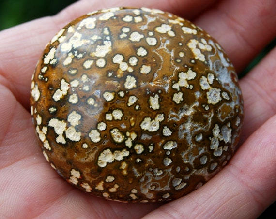 Orbicular Ocean Jasper Pebble from Madagascar, 53 Grams Polished Stone