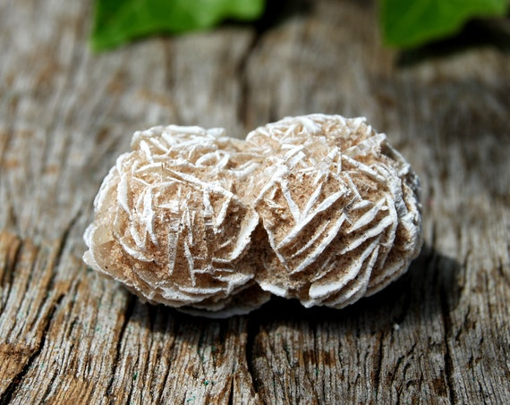 Desert Rose Selenite from Mexico - Grounding and Balance