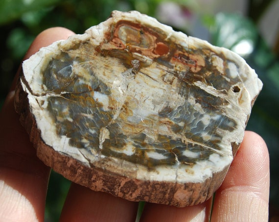 Polished Petrified Wood Slice from Madagascar, Fossilized Wood -  71 grams