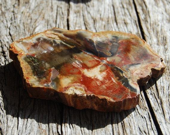 Petrified Wood Slice from Madagascar, Polished Fossilized Wood -  57 grams