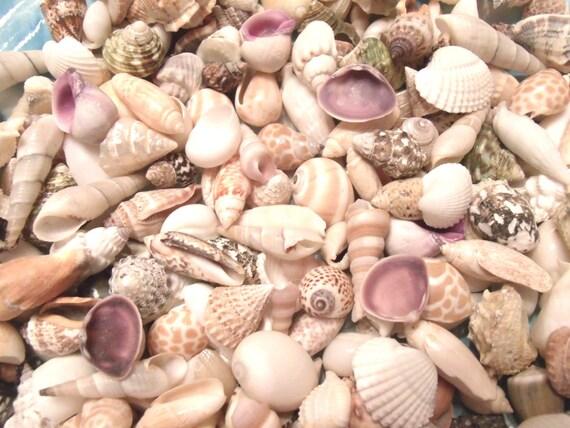 Seashells Mix Crafts Sailors Valentine Beach Wedding Etsy