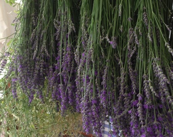 LAVENDER - Organic Dried Lavender Flowers - FREE  DELIVERY - Fragrant Homegrown Lavender - Pot Pouri Lavender - Australian Seller