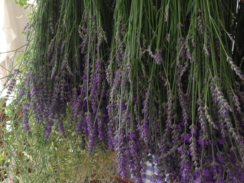 LAVENDER  Organic Dried Lavender Flowers  FREE  DELIVERY  image 0