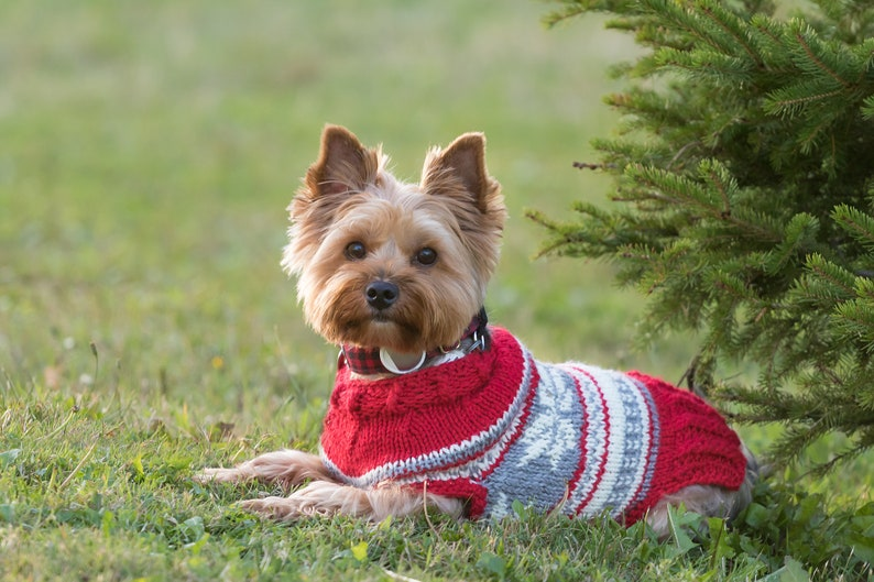 Dog Clothes  Holiday Gift for Dog Lovers  Dog Sweater  image 0