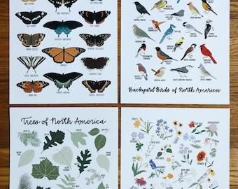 Natural History Print Bundle