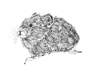 Pika drawing, mouse art, fine art illustration, animal drawing, woodland animals, reproduction of original drawing, folk art, nature art