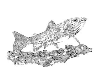 Westslope Cutthroat Trout drawing, original illustration, animal artwork, natural history, conservation, Montana wildlife, fish drawing