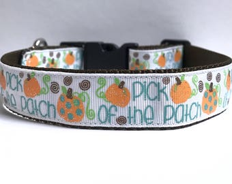 """1"""" Pick of the Patch Dog collar"""