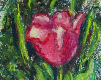 Hot Pink Tulip