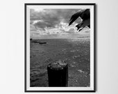 Take Flight - Black and White Bird Photo | Bird Photo | Bird in Flight | Black and White Print | Home Decor | Wall Art | Bird |