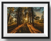 California Forest - photo, art, wall art, sunset wall print, home décor, for the home, Nature print, home, Tree Photo, wall, decor