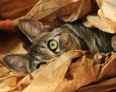 Cat Hiding/ Peek -A -Boo- Cat Photographic print