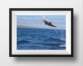 Jumping Dolphin Photo Print - Dolphin Photograph - Dolphin Print - Dolphin Wall Art - Dolphin Photography - Dolphin Art - Ocean Photography