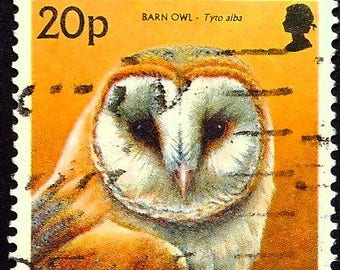Barn owl, Tyto alba -Handmade Framed Postage Stamp Art 22107AM