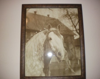 Beautiful Vintage Colton Photograph of a Horse