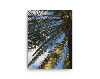 Palm Tree Up Close on Canvas
